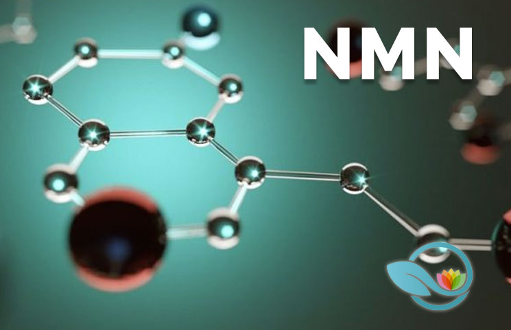 What is Nicotinamide Mononucleotide? How NMN Helps NAD