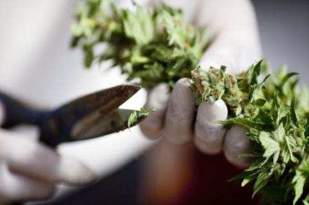 Hope for dope: Alcoholics face a greater risk than marijuana users, doctors insist