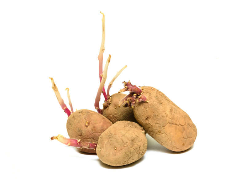 Are They Eat Sprouted Potatoes Safe