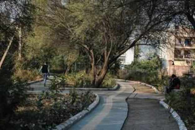 Image result for 7 km forest in gurgaon