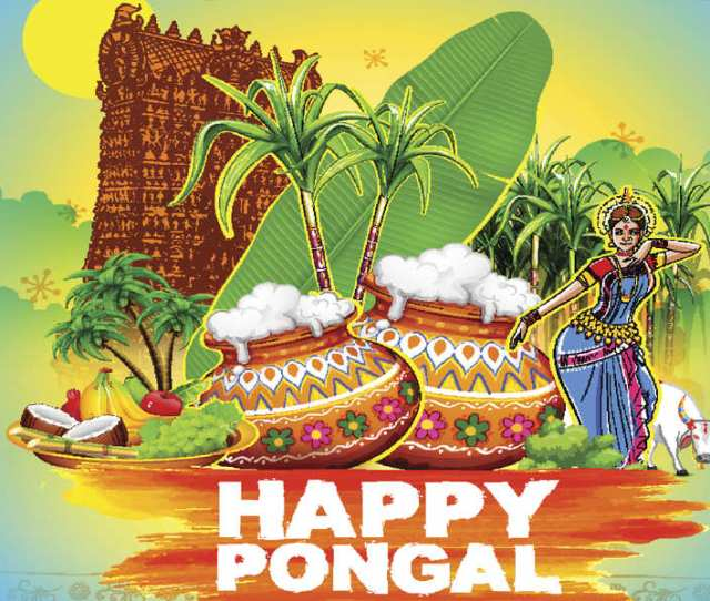 When Is Pongal  How It Is Celebrated History Legend Story