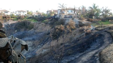 Canyon behind burned-out house in Carlsbad.