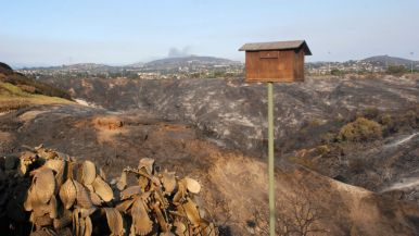 Canyon behind burned house on Black Rail Road was blackened Wednesday night in Carlsbad.