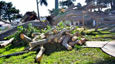 Fort Rosecrans National Cemetery crew had started work to remove fallen tree. Photo by Chris Stone