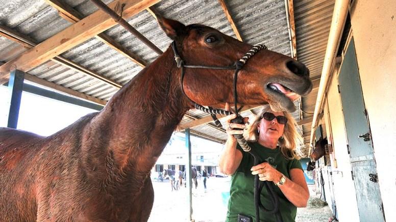 Barbara Laurito of Bonsall comforts her horse Wyoming