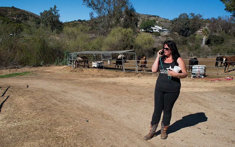 HiCaliber Horse Rescue, inewsource