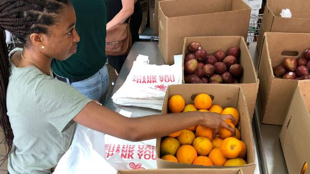 Volunteer bags fruit