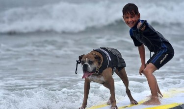 Hanzo the dog, who began surfing when he was eight months old, came out of retirement to hit the waves with a human companion.