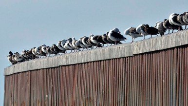 Birds gather on the U.S.-Mexico border where concertina wire wasn't added.