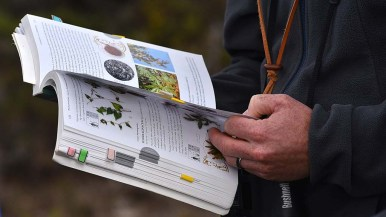 R.J. Van Sant, a volunteer for the UC reserve, looks up types of flora in the area to help answer questions during a tour.