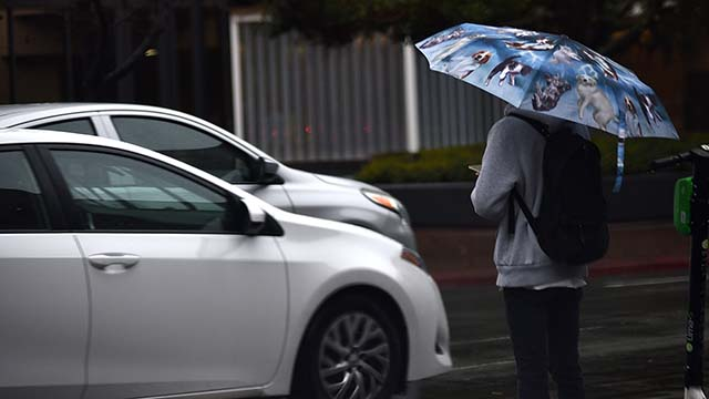 A woman carrying a raining cats and dogs umbrella waits to cross a downtown street.