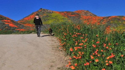 A woman walks her dog to view poppies at Lake Elsinore's Walker Canyon.