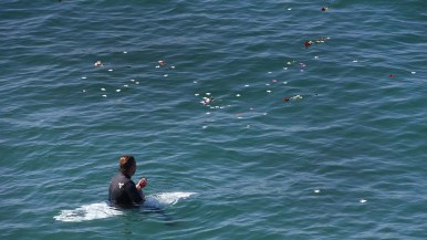 A surfer floats amid flowers tossed by friends off Scripps Pier in honor of Walter Munk. Photo by Chris Stone