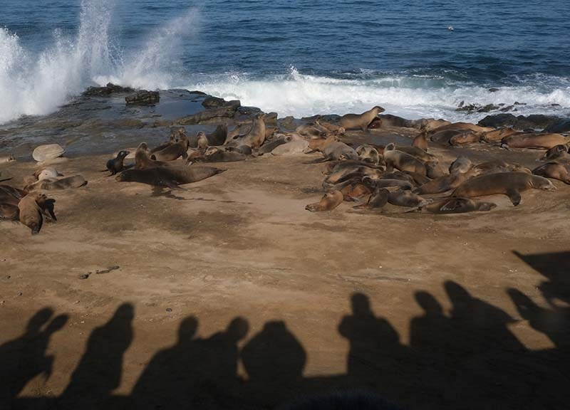 Tourists line up by La Jolla Cove to watch king tide waves and sea lions.