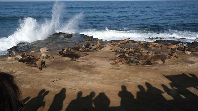 Tourists line up by La Jolla Cove to watch king tide waves and sea lions. Photo by Chris Stone