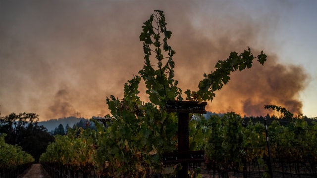 Smoke billows behind a vineyard