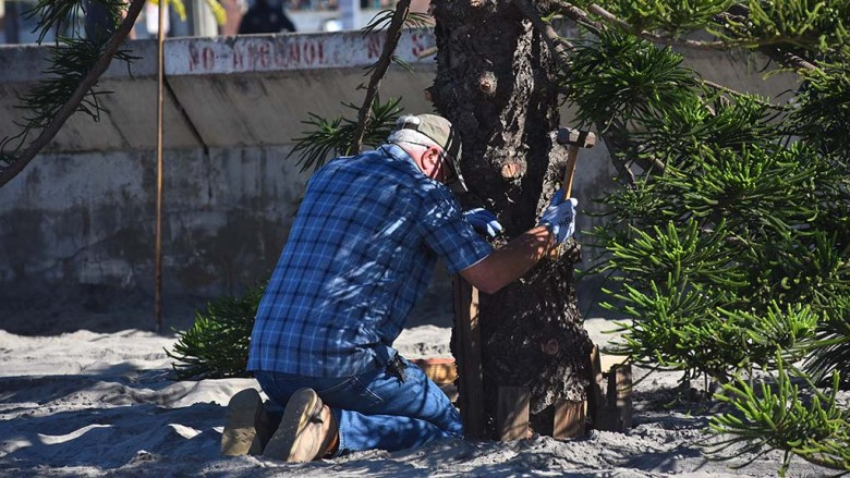 Larry Thayer drives shims into the hole to keep the OB Christmas tree standing straight