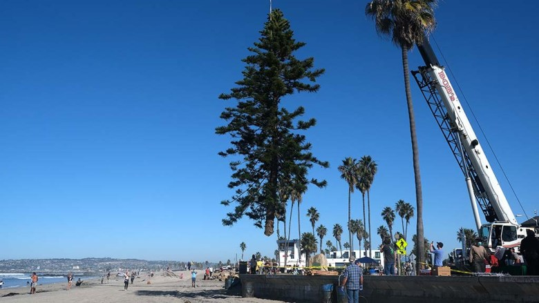 A crane lifts the 30-foot-star pine onto the beach at Newport Avenue and Abbott Street, where it's placed in a hole and stabilized.