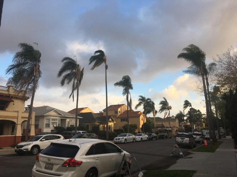 Palm trees sway in Hillcrest