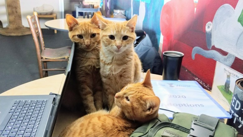 Kittens at The Cat Café