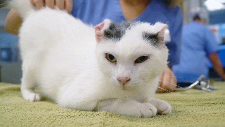 Rescued cat Otay mesa West