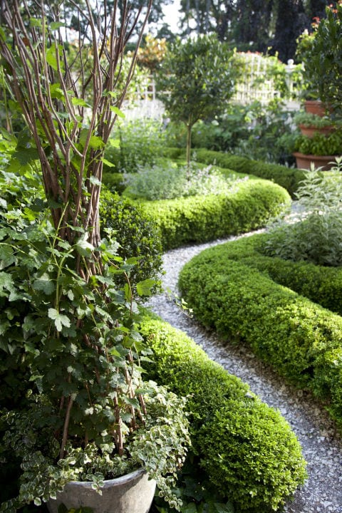 grasshopper winding path