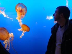 Vancouver Aquarium - an onlooker studies these gorgeous sea creatures.