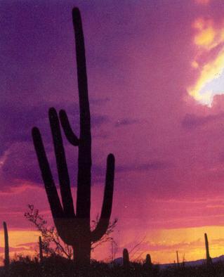 cactus0091