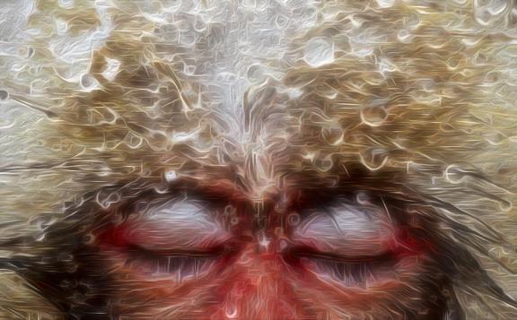 a snow monkey dreams - jack zulli