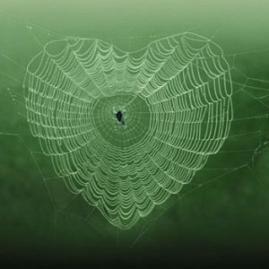 dog worldbridger heart web