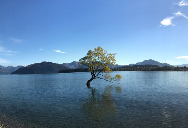 A tree grows out of Lake Wanaka