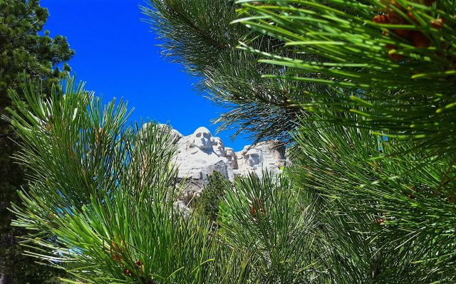 Mount Rushmore framed by a pine tree