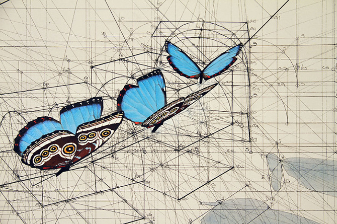 Architect-reveals-the-secret-of-natures-beautiful-designs-in-a-hand-drawn-coloring-book-56fbb56f33f4c__880_670