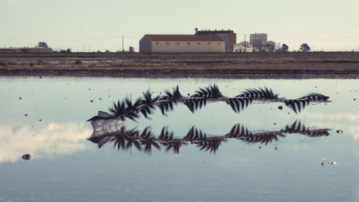 Aves en vuelo por Xavi Bou 6