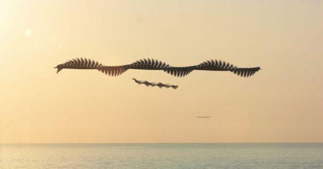 Aves en vuelo por Xavi Bou 1
