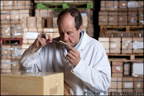 cheesemaker taking sample from cheese block
