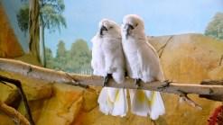 Bird Friends