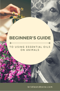 Beginner's Guide to Using Essential Oils