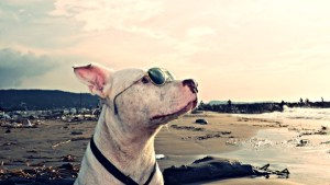 Dog-Friendly Hotels- What Does It Really Mean?
