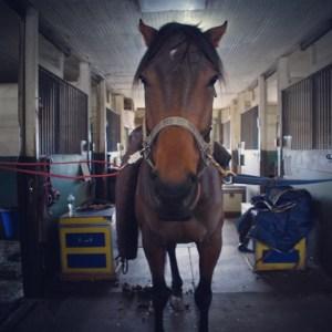 Grouchy horse