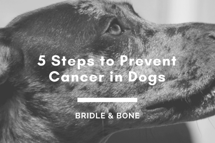 prevent cancer dogs