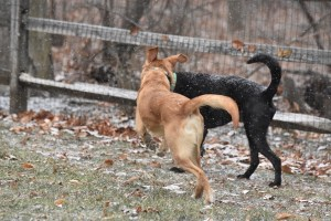 3 Easy Ways to Keep your Dog Fit and Fabulous