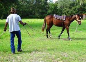 Groundwork with horses