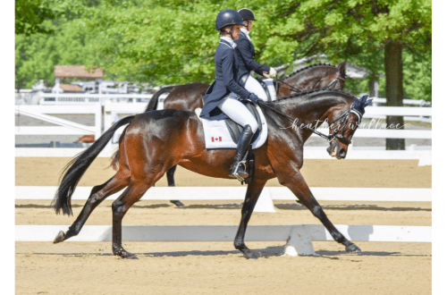 Dancing with Dressage