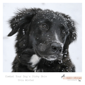 Combat Your Dog's Itchy Skin this Winter