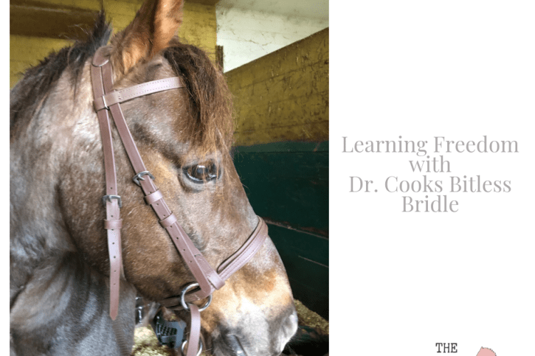 Dr. Cooks Bitless Bridle Review
