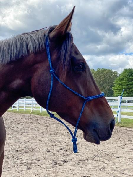 Delight Heart Horse