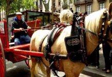Se acaban los paseos en carrozas de caballos en Barcelona