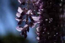 close tree blossom