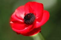 flower close 2